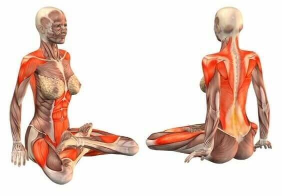 Padmasana-postura-de-lotus-musculo