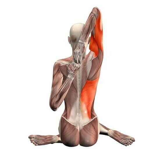 gomukhasana-postura-rosto-vaca-musculo