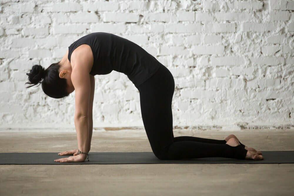 postura-gato-yogateria